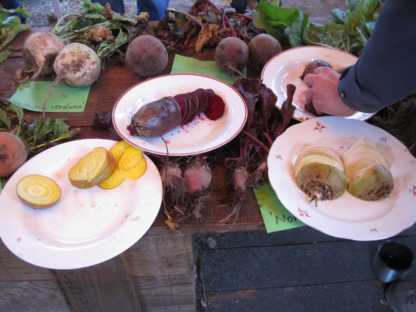 Samenfeste Gemüsesorten – auf den Spuren von Daucus carota und Beta vulgaris